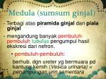 medula sumsum ginjal