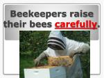 beekeepers raise their bees carefully