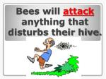bees will attack anything that disturbs their hive