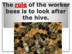 the role of the worker bees is to look after the hive