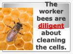 the worker bees are diligent about cleaning the cells