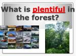 what is plentiful in the forest