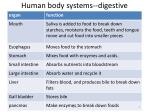 human body systems digestive