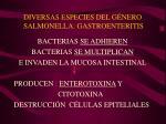 diversas especies del g nero salmonella gastroenteritis1