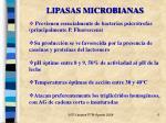 lipasas microbianas