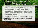ending net deforestation planting trees