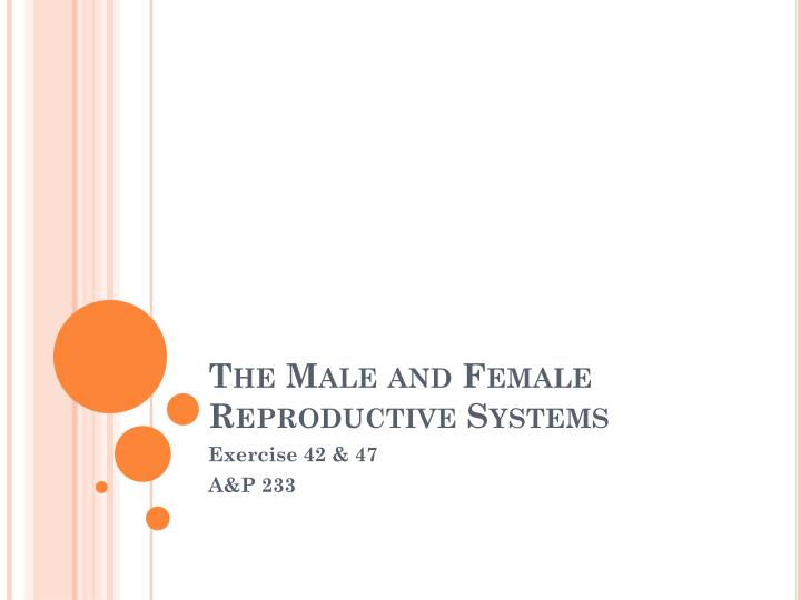 the male and female reproductive systems n.