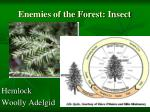 enemies of the forest insect1