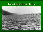 forest resources trees