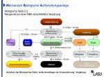 m echanisch b iologische a ufbereitungsanlage