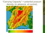 carrying capacity potential possum density in absence of control