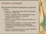 anatomie patologic