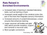 rats raised in enriched environments