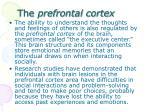 t he prefrontal cortex
