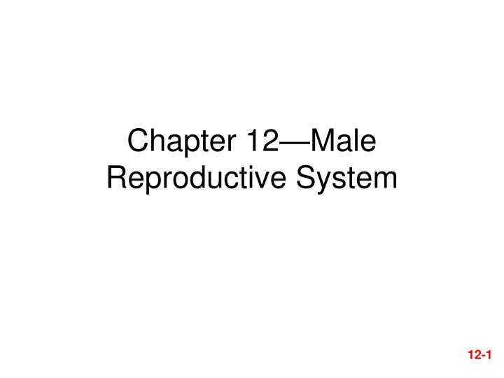 chapter 12 male reproductive system n.