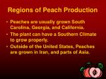 regions of peach production