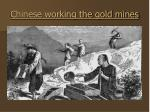 chinese working the gold mines