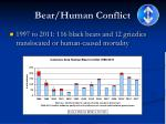 bear human conflict