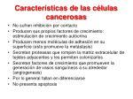 caracter sticas de las c lulas cancerosas