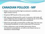 canadian pollock mp