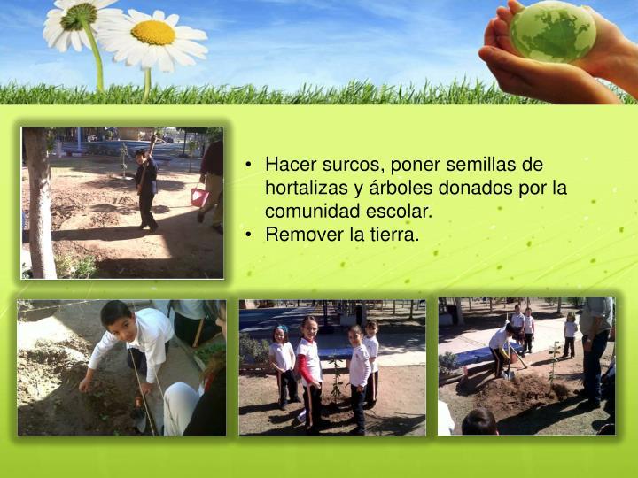 Hacer surcos, poner semillas de hortalizas y árboles donados por la comunidad escolar.