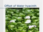 offset of water hyacinth