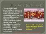 how does orlistat work