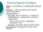 chemical digestion fat begins