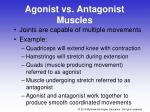 agonist vs antagonist muscles
