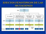 efectos fenotipicos de las mutaciones1