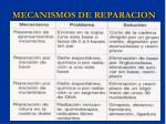 mecanismos de reparacion1