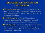 recombinacion en las bacterias