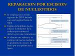 reparacion por escision de nucleotidos