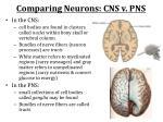 comparing neurons cns v pns