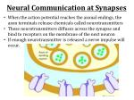neural communication at synapses