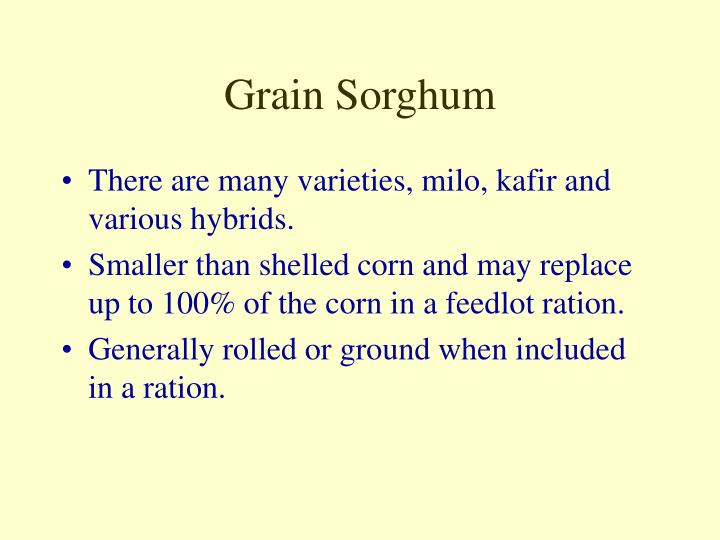 Grain Sorghum