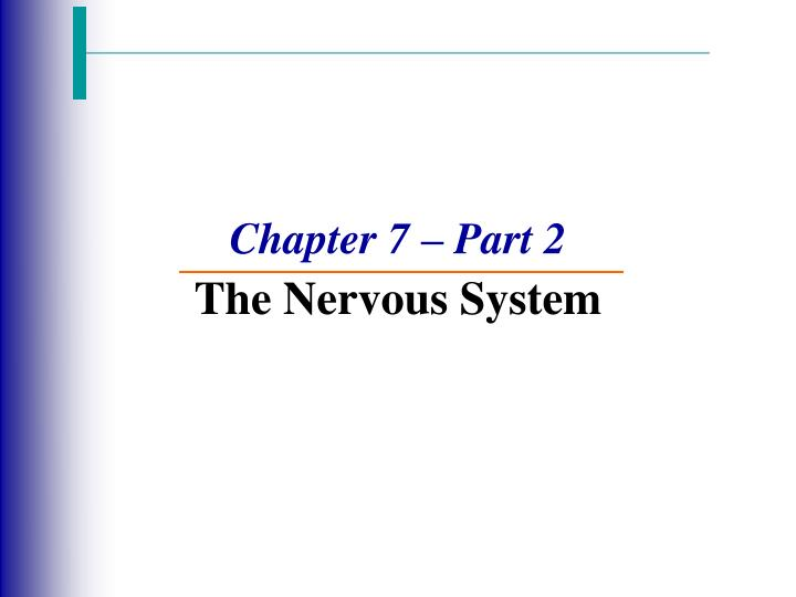 chapter 7 part 2 the nervous system n.