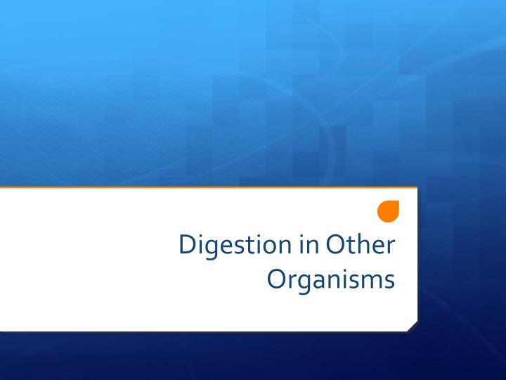 digestion in other organisms n.