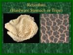 reticulum hardware stomach or tripe