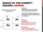 basics of the punnett square answer