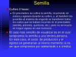 semilla1