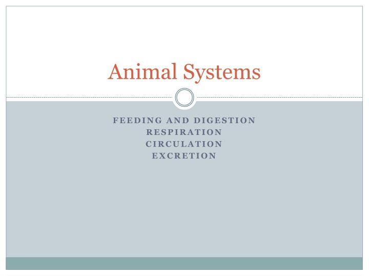 animal systems n.
