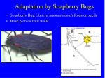 adaptation by soapberry bugs