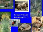 energy nutrient relations ch 7