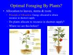 optimal foraging by plants1
