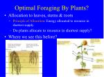 optimal foraging by plants2