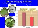 optimal foraging by plants3