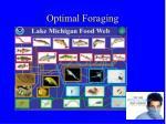 optimal foraging1