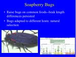 soapberry bugs1