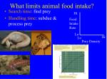 what limits animal food intake